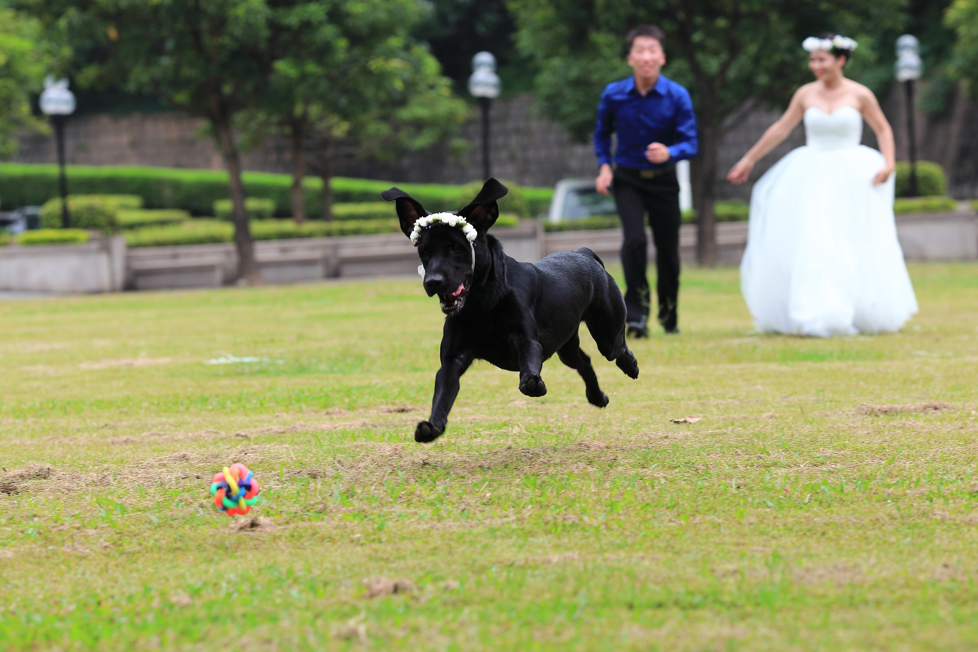אורח על ארבע: כך תשתפו את הכלב בחתונה שלכם